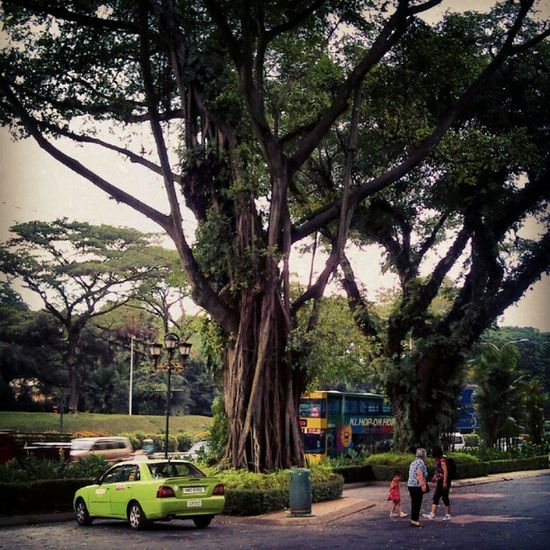 Verybig Bigtree BIG Plant Very Old Scene Nature