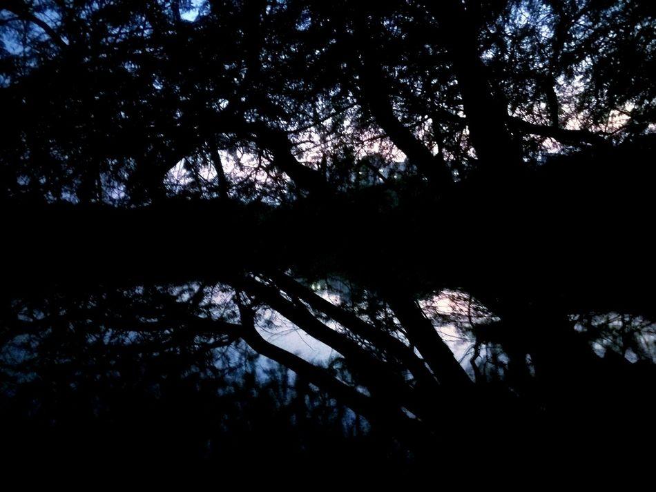 Chennai Beauty In Nature IIT Madras No People On The Way Waiting Randomshot Sunset Dramatic Sky City Evening India