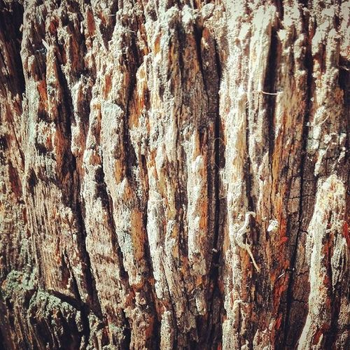 Bark Tree Wood Wooden_hue Texture Nature Wmm_brown