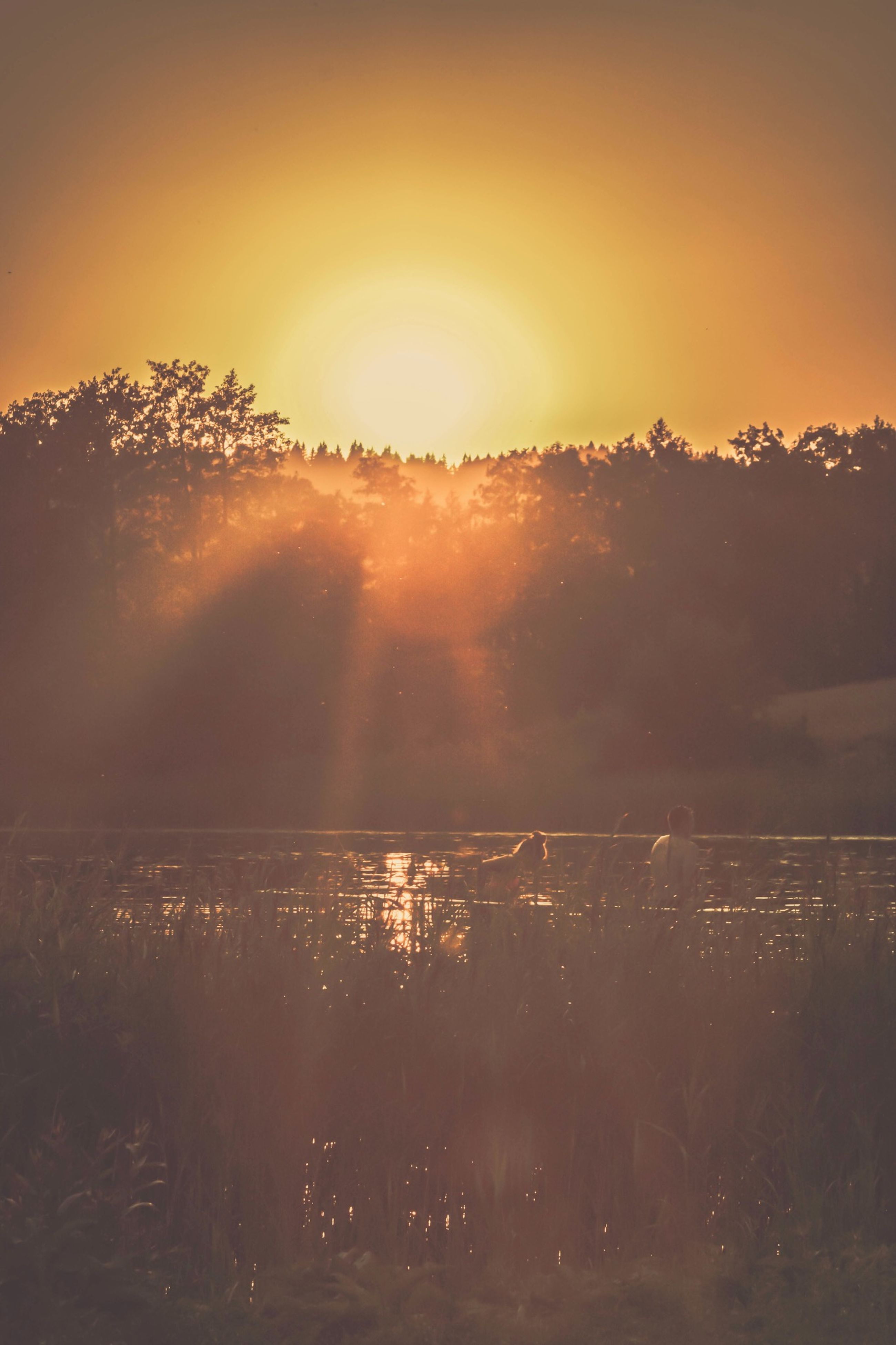 sunset, scenics, tranquil scene, tranquility, tree, sun, beauty in nature, landscape, clear sky, nature, sky, water, idyllic, sunlight, outdoors, orange color, silhouette, mountain, field, no people