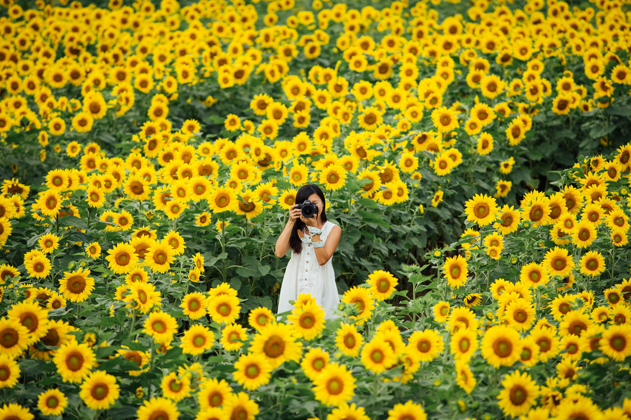 Lost in the Massive Sunflower Maze Agriculture Asian Girl Blooming Camera EyeEmNewHere Flower Freshness Girl Growth Hokkaido Japan Massive Nature One Person Pattern Petal Photography Plant Spring Spring Flower Springtime Sunflower Sunflower Field Travel Yellow