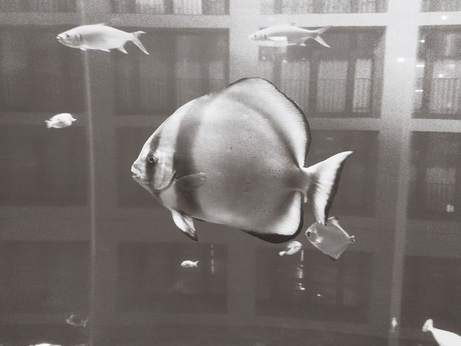 Fish Animals