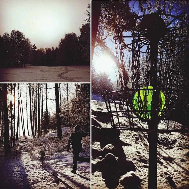 Sunlight Outdoors Tree Winter Wonderland Discgolf Discgolfbasket First Eyeem Photo