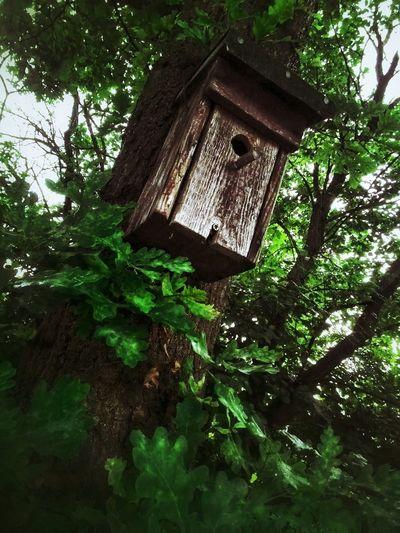 Oak Tree Oak Bird House Green Grange Nature_collection The Moment - 2015 EyeEm Awards The Adventure Handbook Amazing Architecture AsusZenfone5Photography