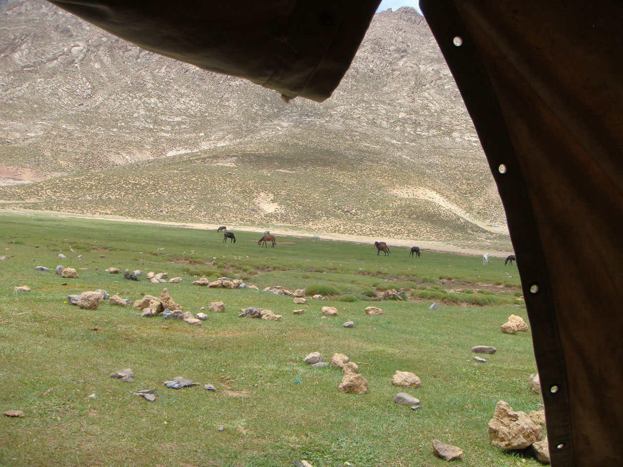Atlasmountains Day Free Horses Grass Green Color Horses Maroc ❤️ Mountain Nature Outdoors View Of Inside A Tent