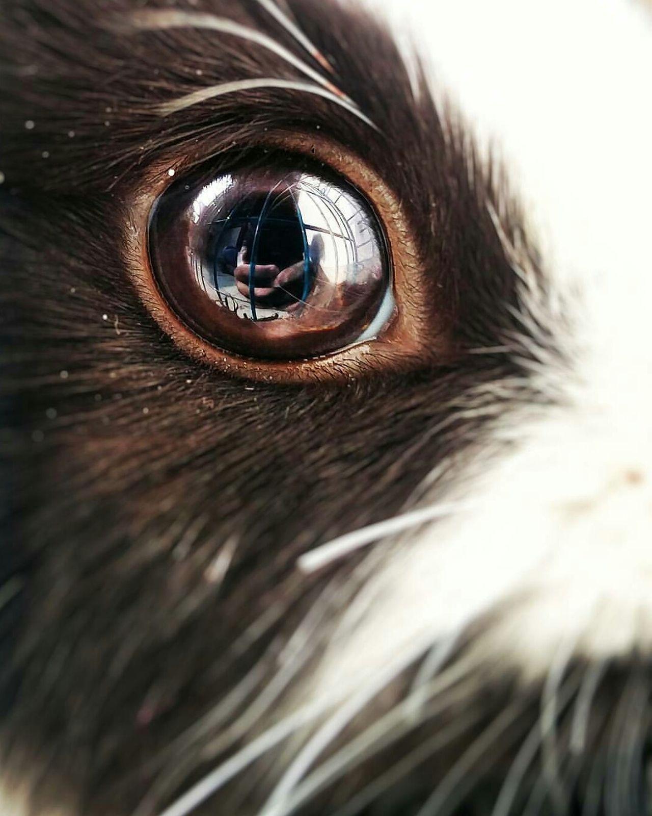 Bunnyeyes Close-up Oneplus2