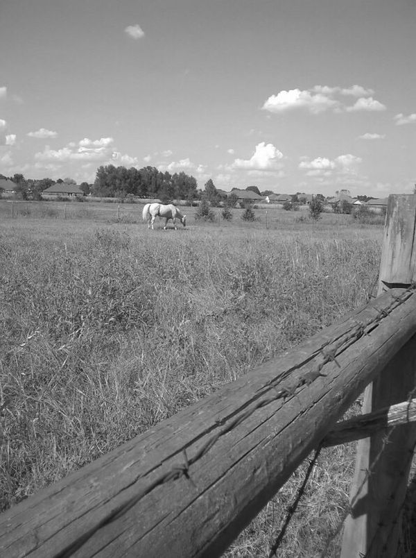 Black And White Photography White Horse Portrait Field Sky Agriculture Mode Of Transport Day Transportation Outdoors Nature Tree Land Vehicle Rural Scene Growth No People Landscape