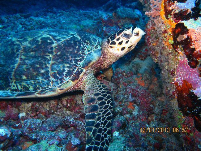 Beautiful Surroundings Lovinginthemoment Best Day Ever Undersea
