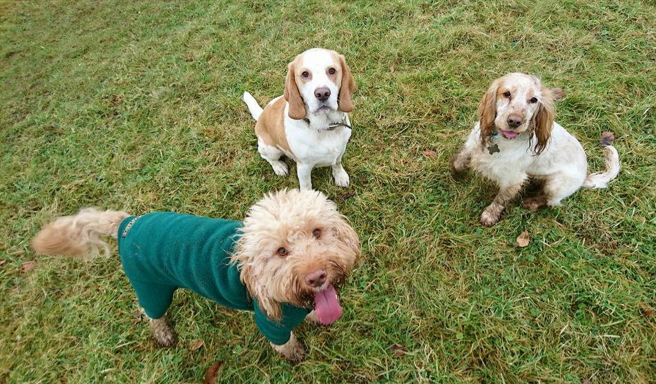 Spanielsofinstagram Dogslife DogLove Dog Love Dogs Of EyeEm Dogs_of_instagram Dogsareawesome Doglovers Dog Walking Dog Photography Dog❤ Canine Photography Canine Love :) Cockerpoo