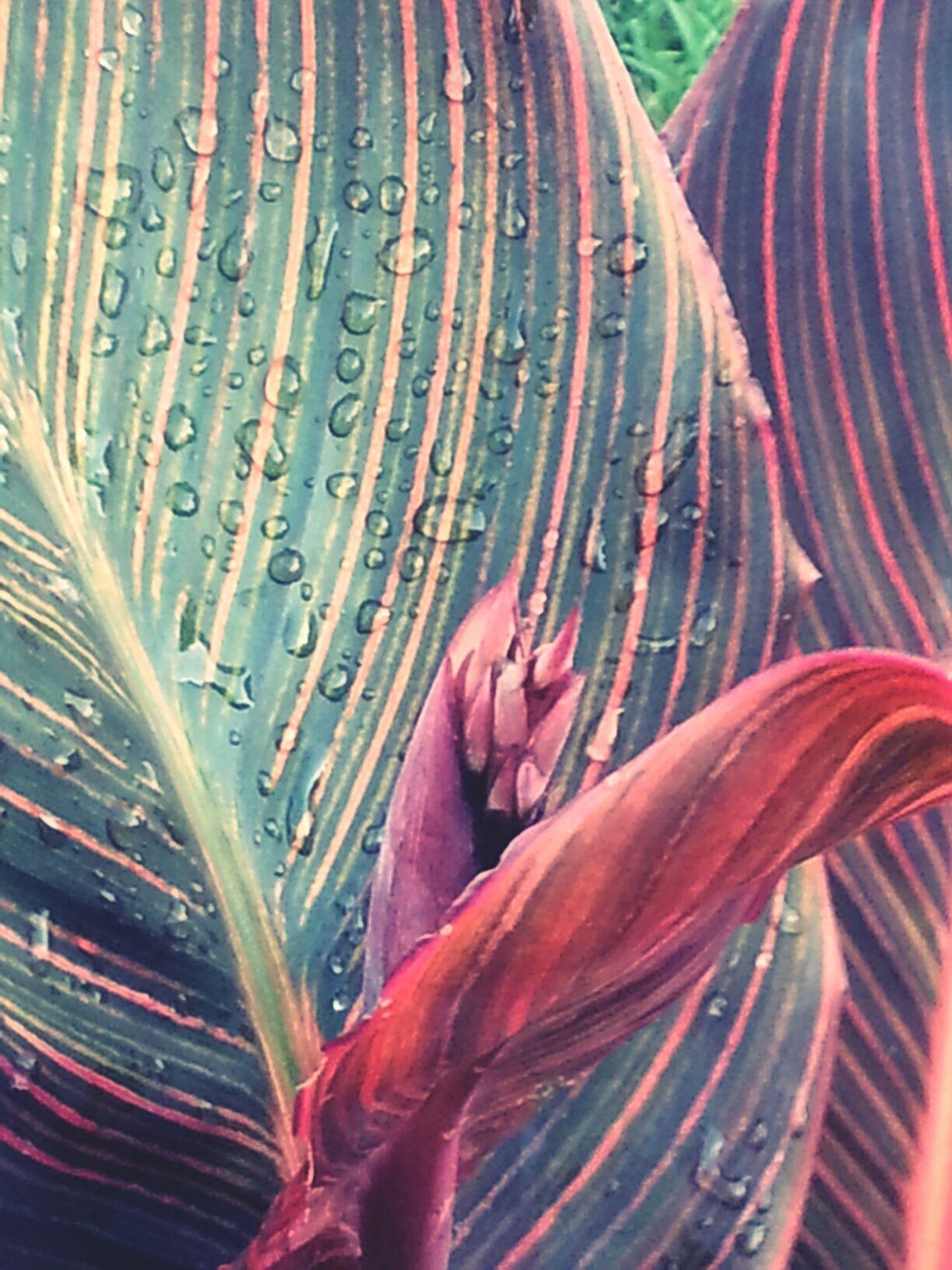 Taking Photos Raindrops Plants Nature
