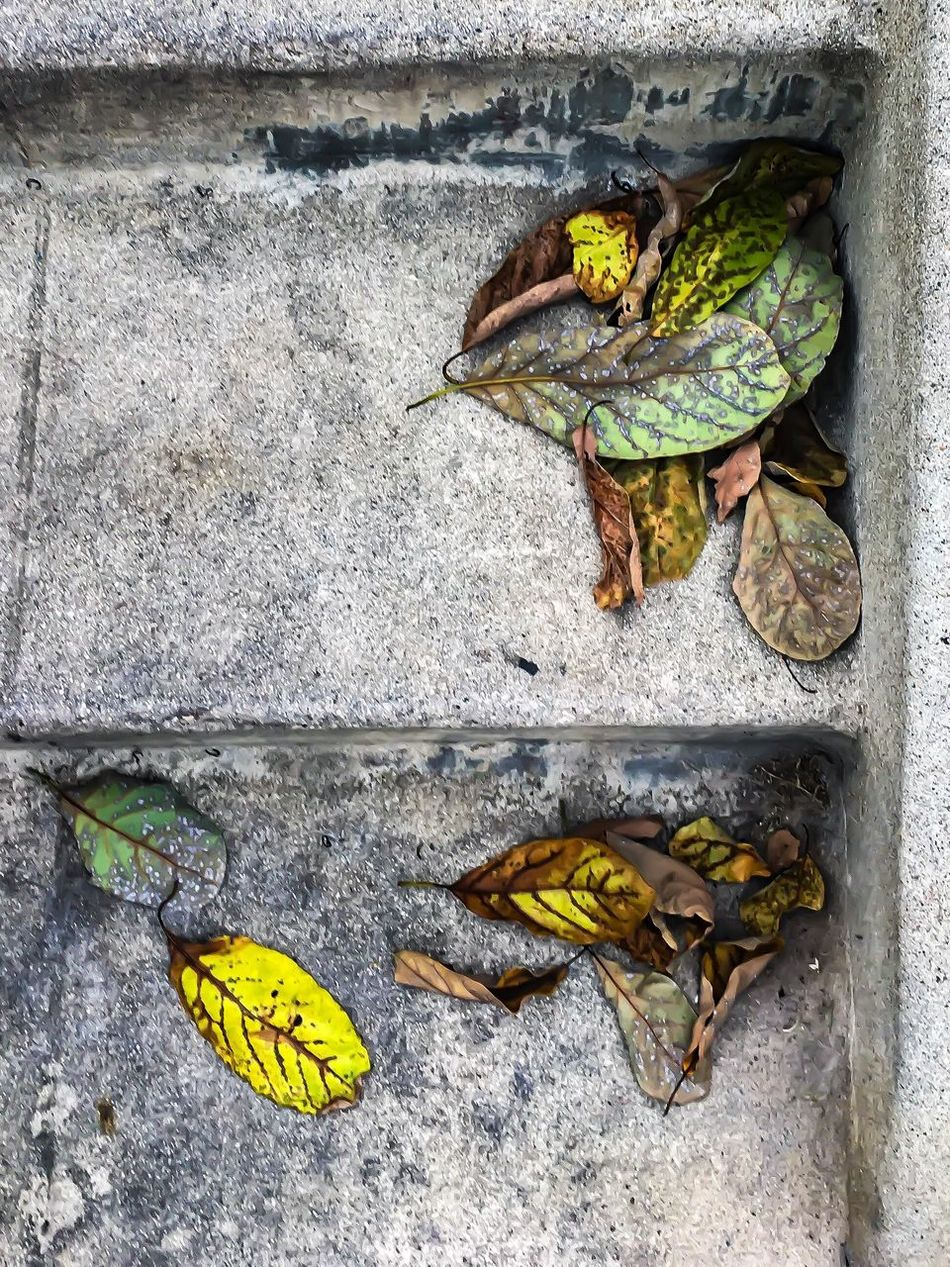 Dry leaves separated by only one cement step No People Leaf High Angle View Day Outdoors Yellow Close-up Nature Freshness Alone Separation Lonely Stairs Steps And Staircases Leaves Seasons