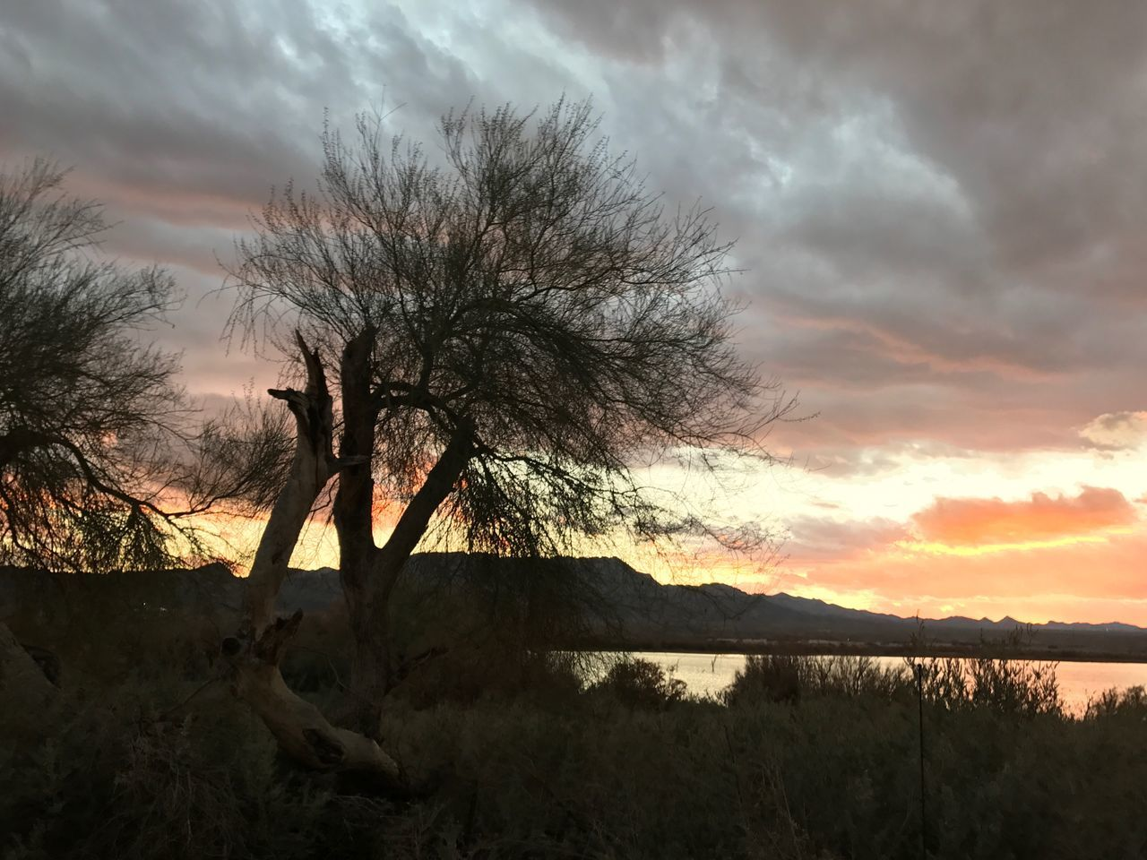 Sky Cloud - Sky Nature Tree Silhouette Beauty In Nature Sunset Tranquility Outdoors No People Scenics Tranquil Scene Bare Tree Landscape Mountain Day No Edit No Filter Desert Beauty Colorado River Huggingatree  Water Reflection Arid Climate