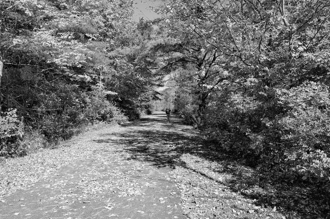 Monochrome Photography fuji xt10 Footpath Tranquil Scene Black & White Blackandwhite Monochrome Fujifilm Fujilove Black And White Photography