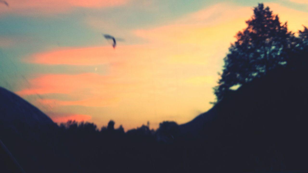 Pink Sky Pink Sunset Free Bird Sunny Days Summer Memories 🌄 Nofilter Flying Sunset Sky