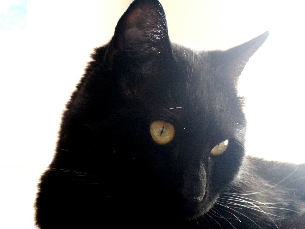 One Animal Domestic Cat Pets Domestic Animals Mammal Feline Indoors  Black Color Animal Themes Cat Home Interior Yellow Eyes Close-up No People Day Cats Of EyeEm Cat Lovers Yellow Eyed Cat Black Cats Are Beautiful Cat Eyes Cat Gaze Black Cat Photography Tranquility Black Cat Cat♡