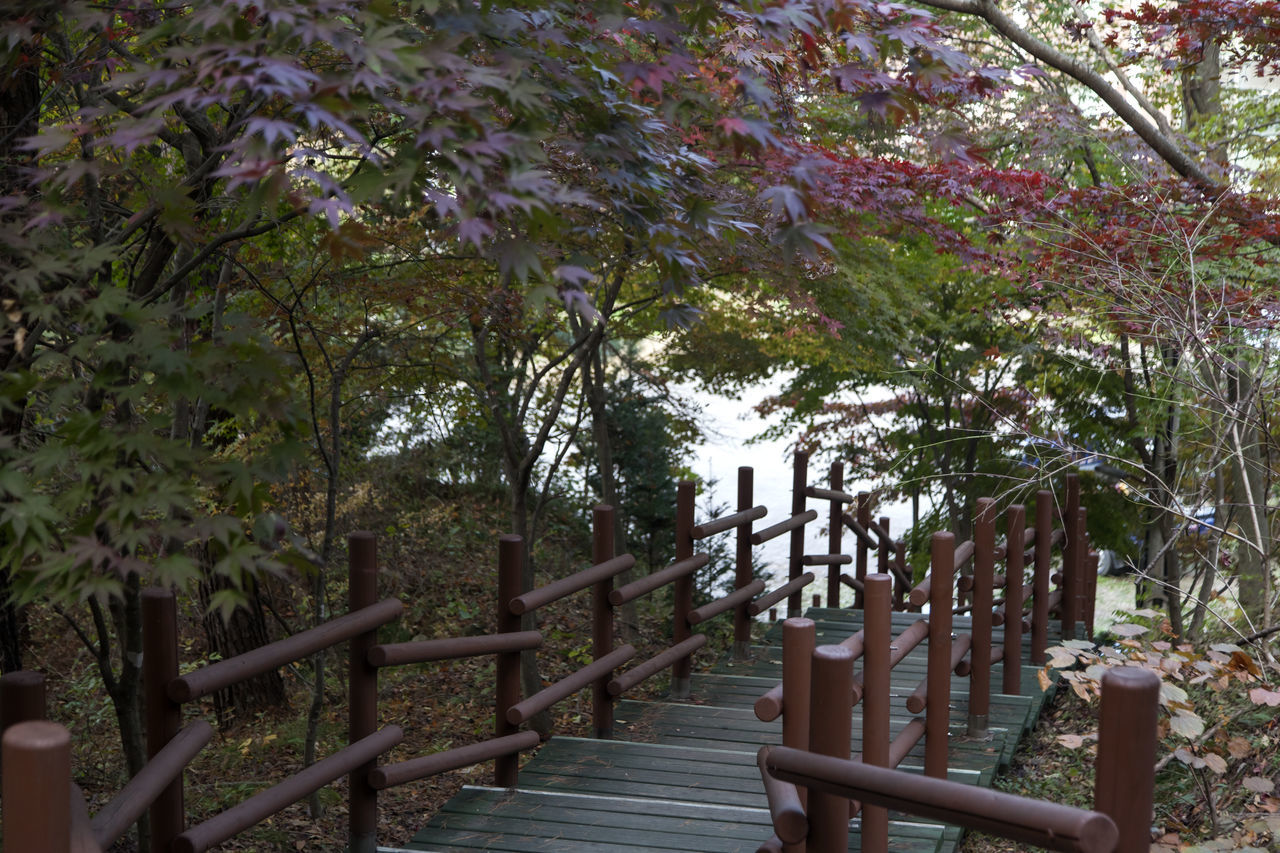 autumn in Maisan Mountain, Muan, Jeonbuk, South Korea Autumn Beauty In Nature Close-up Day Fall Footbridge Forest Gate Growth Maisan Nature No People Outdoors Railing Scenics Stairway Tranquility Tree Wood - Material