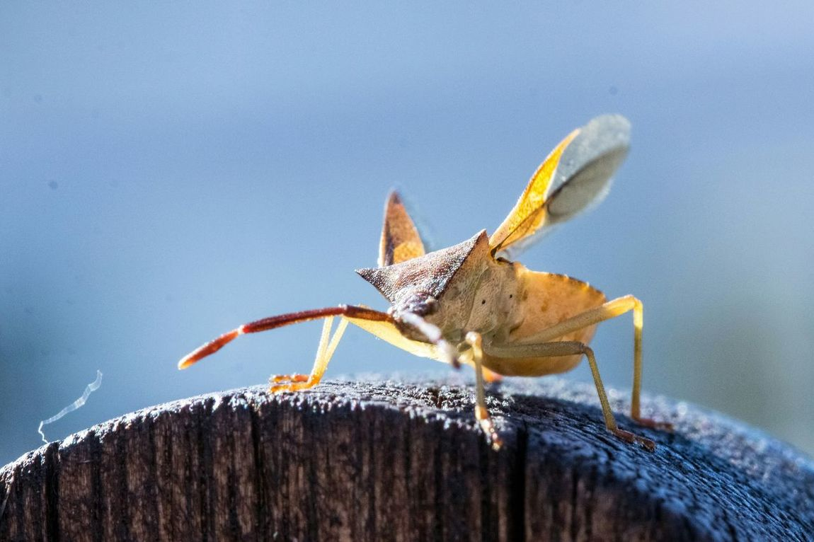 Macro Bug Insect Bugs Nature Insects  Nature On Your Doorstep Capture The Moment Macro Beauty
