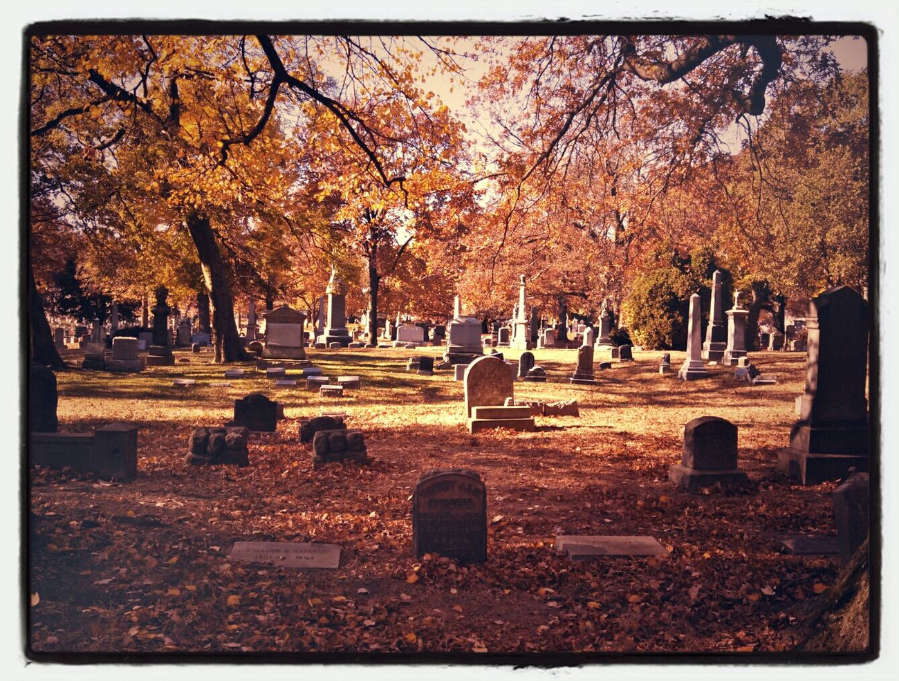 Foliage Cemetery Brooklyn