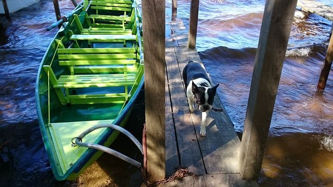 Relaxing Enjoying Life Hello World Lake Boats Dogslife Dogs Animal Eyemdog