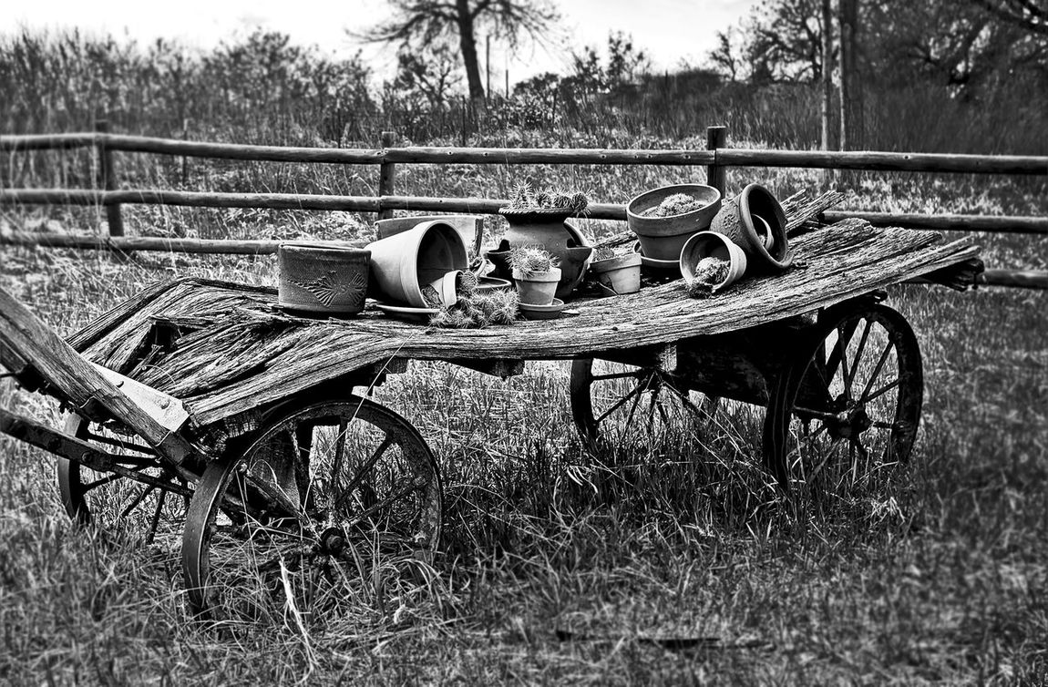 Wagonwheel Blackandwhite Black & White Cactus Pots Western Contrast Oldwagon Weathered Wagon Wheel Wagonwheels Black And White Photography Cactus Garden Cactuslover Cactuses Cactus Series B&W Collections B&w Photography Blackandwhite Photography Old Wagons The Great Outdoors - 2016 EyeEm Awards The OO Mission Fine Art Photography