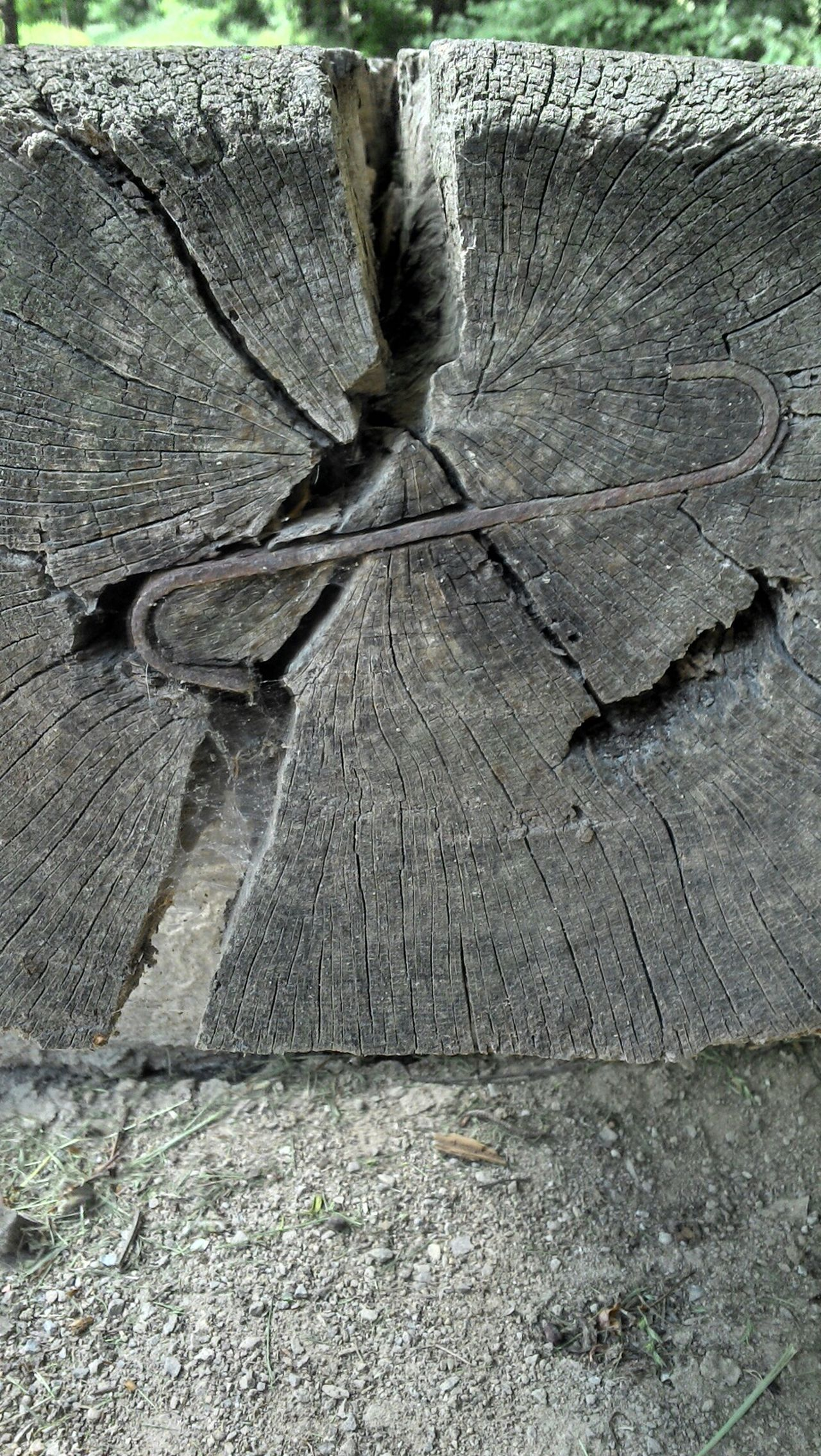 Scars- Taking Photos Check This Out Dead Tree Fantasy Other Perspectives Eeyem Nature Lover Dontgiveup Makro