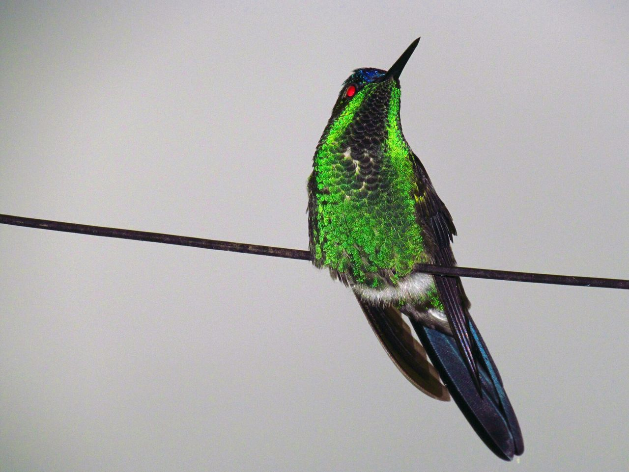 Beautiful stock photos of hummingbird, Animal Themes, Animals In The Wild, Bird, Cable