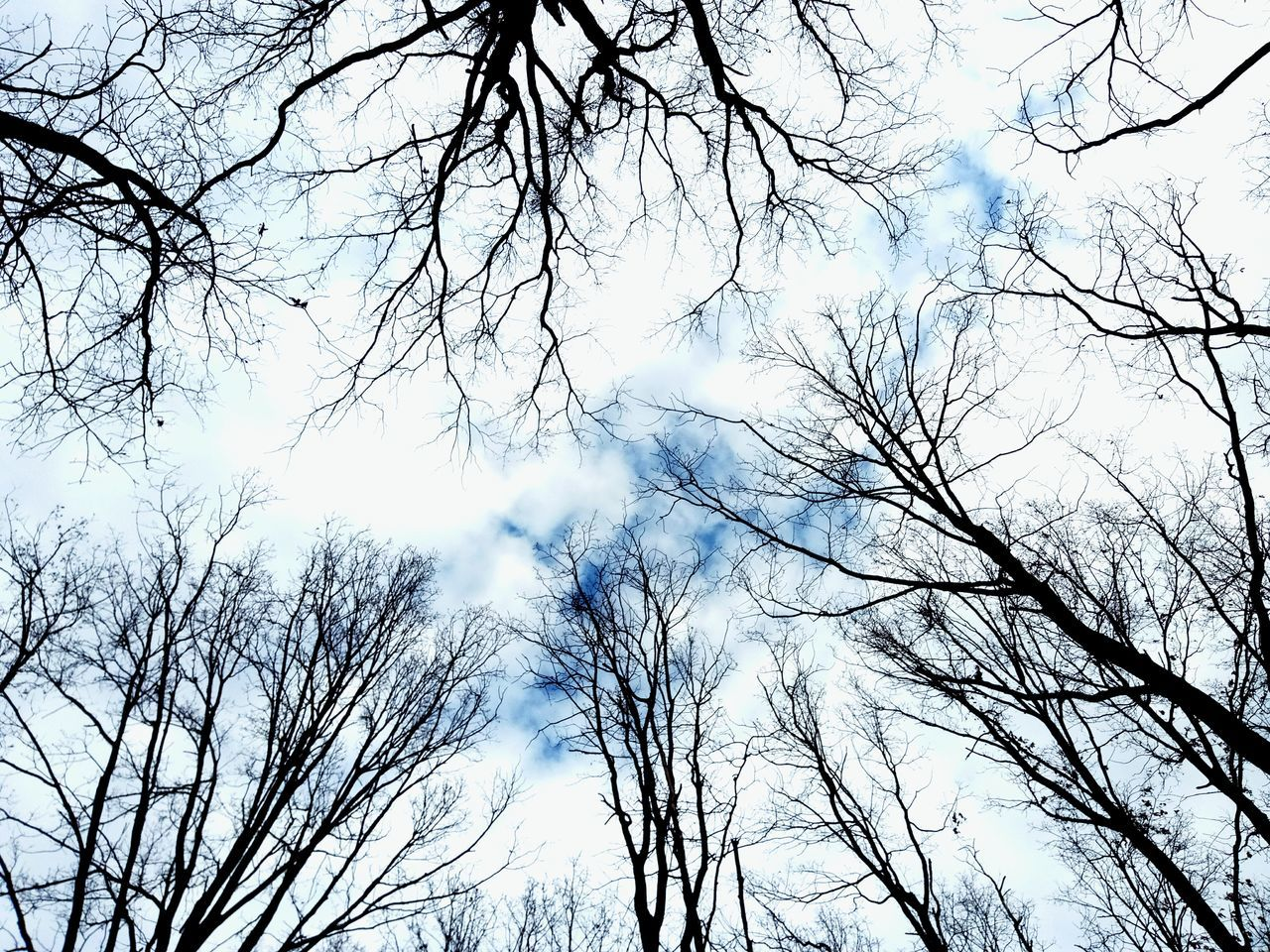 low angle view, bare tree, branch, tree, nature, beauty in nature, sky, day, no people, tranquility, outdoors, scenics
