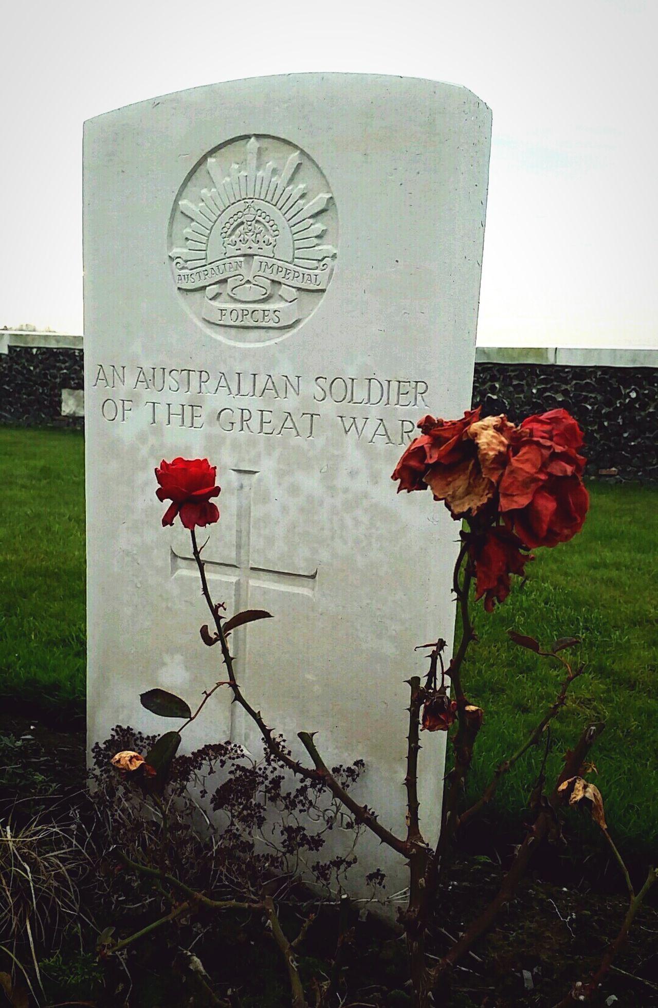 Tombstone Grave Graveyard Redrose  Died Soldier Worldwar1