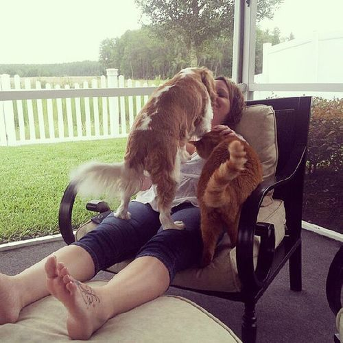Nothing like a little fur-baby love Molly Andy Summertime Kingcharlescockerspaniel orangecat