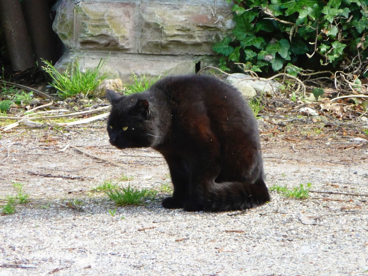 GERMANY🇩🇪DEUTSCHERLAND@ 2008 May Cat Black Cat