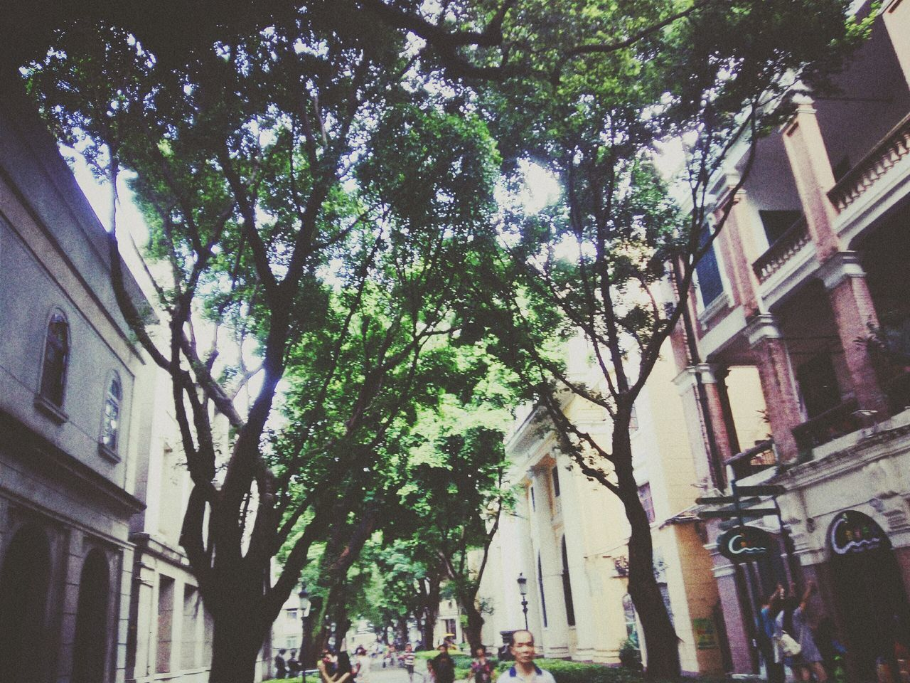 architecture, tree, building exterior, built structure, city, outdoors, branch, day, no people