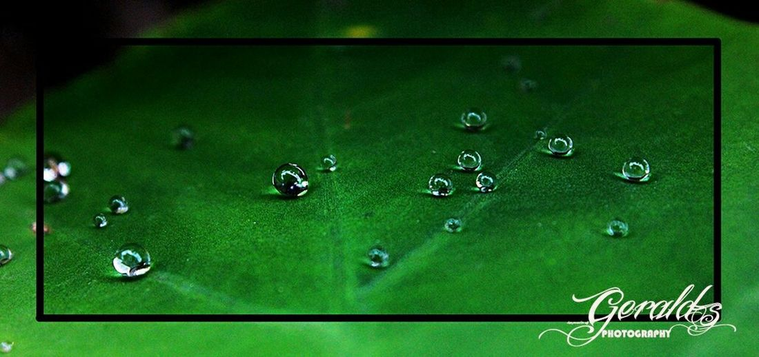 The EyeEm Facebook Cover Challenge Waterballs Water Droplets Waterball