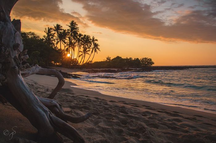Mahaiula Bay Sunset. 🌴🌅 Hawaii Big Island Big Island Hawaii Mahaiula Beach Palm Palm Tree Beach Sea Sand Sunset Sky Tree Nature Beauty In Nature Scenics Horizon Over Water No People Relax Relaxing Thinking Lonely Loneliness Love Peace Peaceful Miles Away