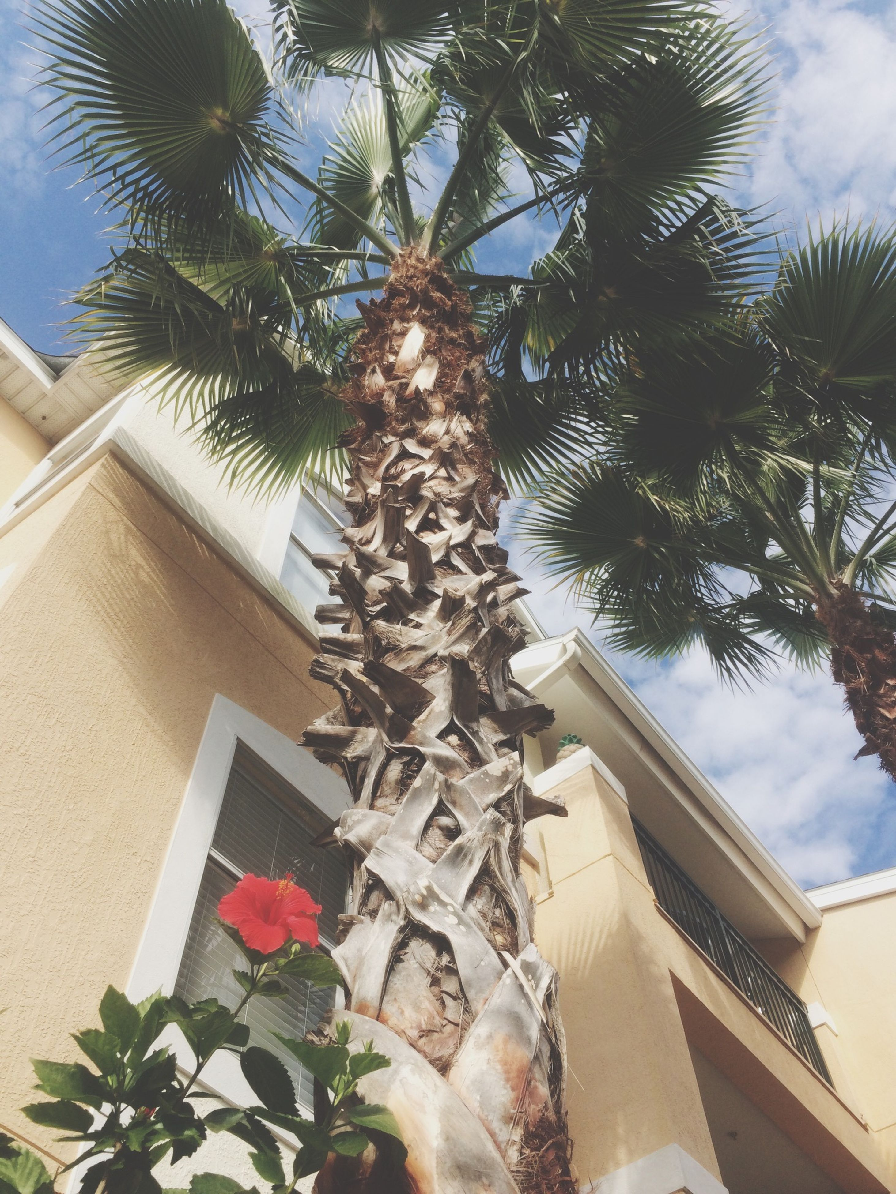architecture, building exterior, built structure, low angle view, tree, sky, residential building, residential structure, house, growth, window, building, day, palm tree, outdoors, sunlight, no people, roof, branch, city