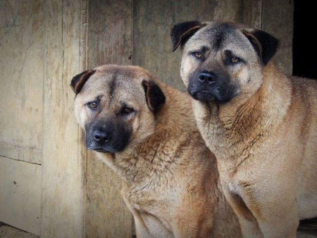 two dogs in Mộc Châu, Sơn La, Vietnam Animal Themes Close-up Couple In Sad Day Dog Domestic Animals Friendship Mammal No People Pets Puppy Togetherness Worry
