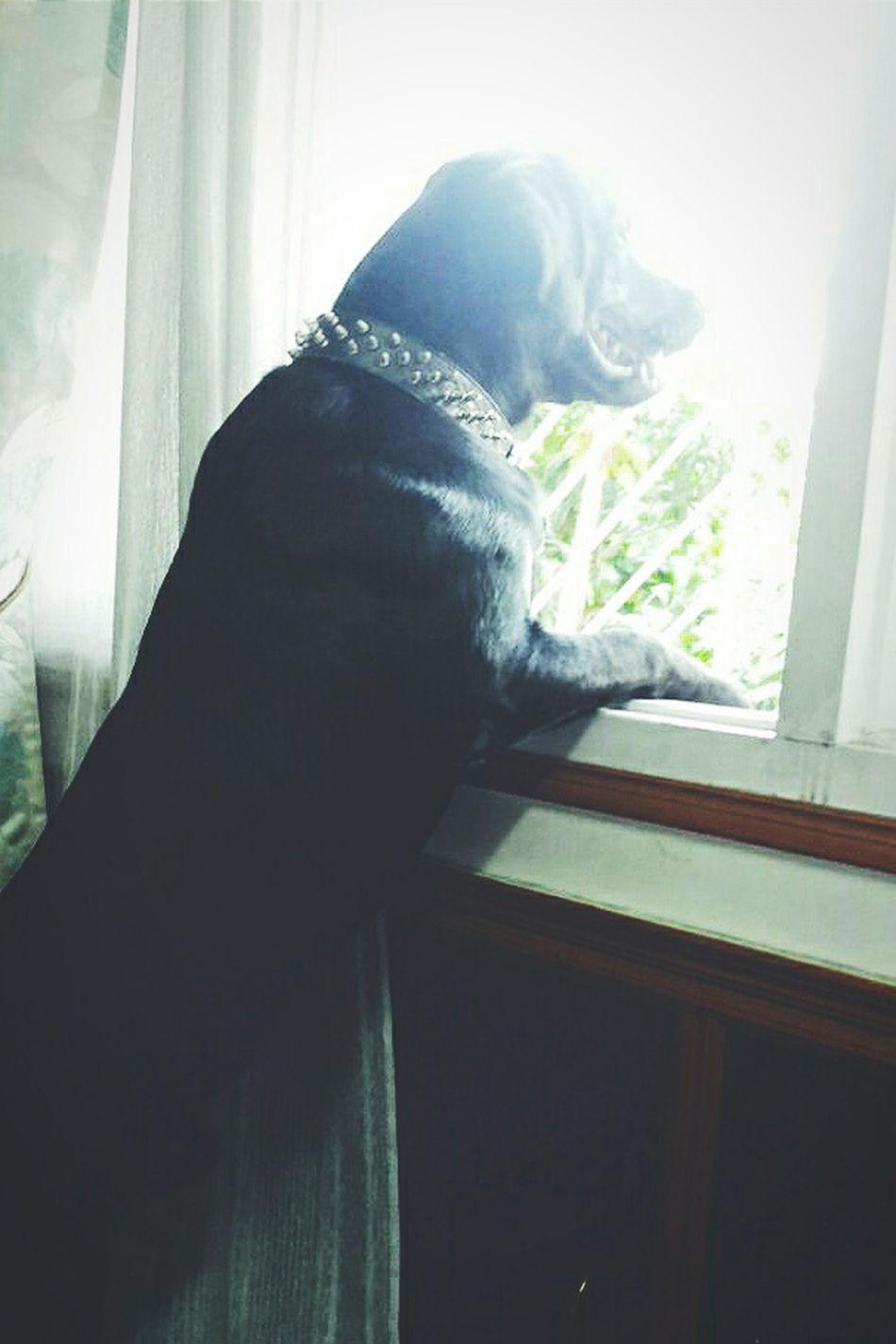 Letmeseethis Sobeautifuloutside Dog Love Dogportrait