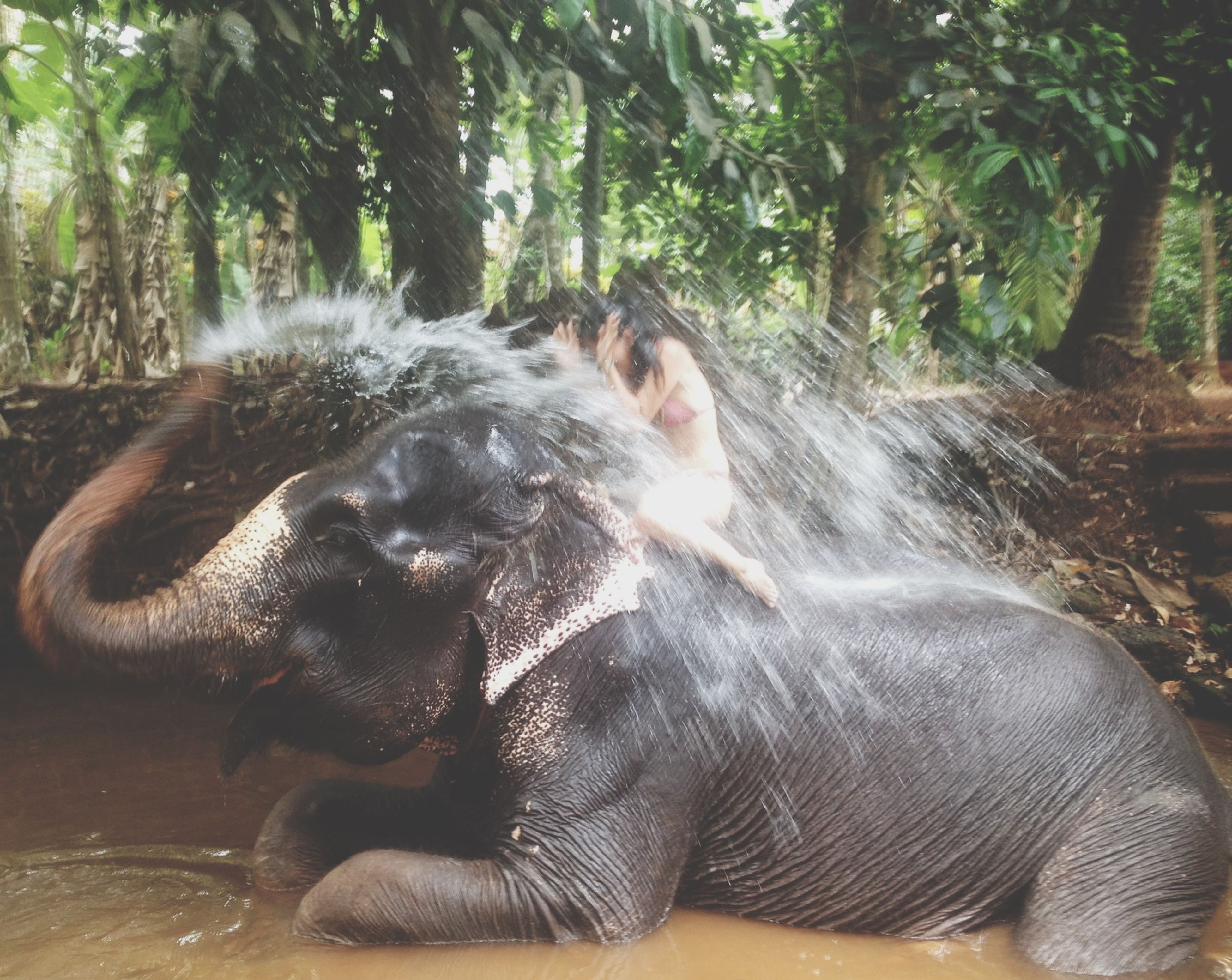 animal themes, one animal, mammal, domestic animals, pets, tree, dog, animal head, relaxation, close-up, animal body part, day, sunlight, side view, resting, outdoors, black color, nature, forest, lying down