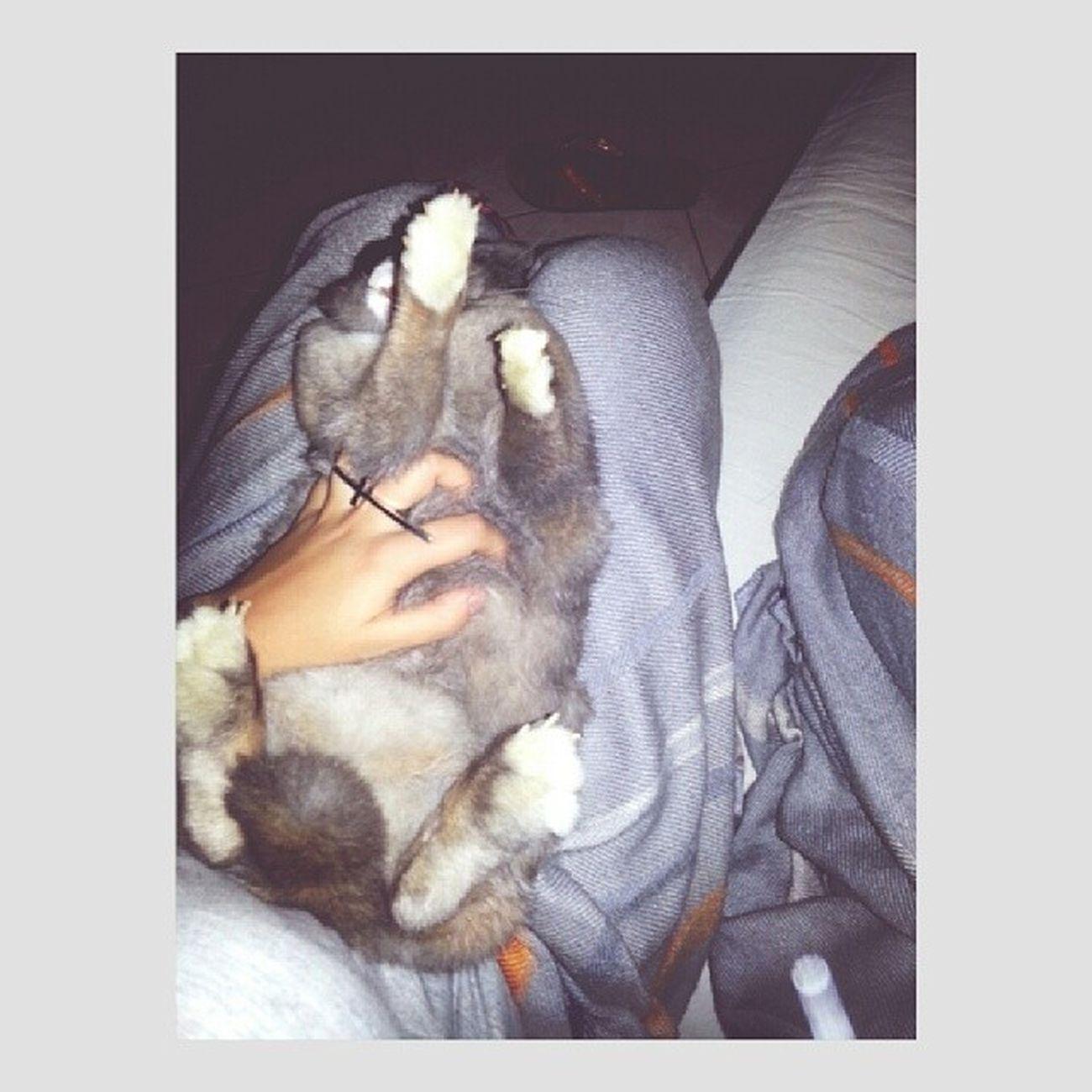 Questa Coniglietta Bellissima Conejo bellosinstaconiglioboh