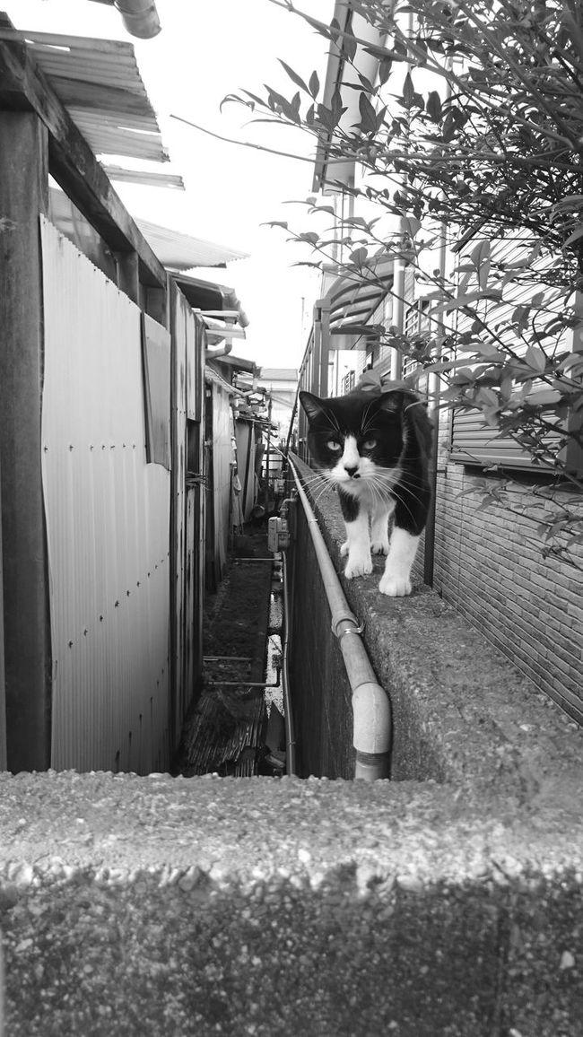 スマホ撮り スマホカメラ Black And White EyeEm Bnw Monochrome ハチワレ猫 野良猫 Stray Cat EyeEm Cats