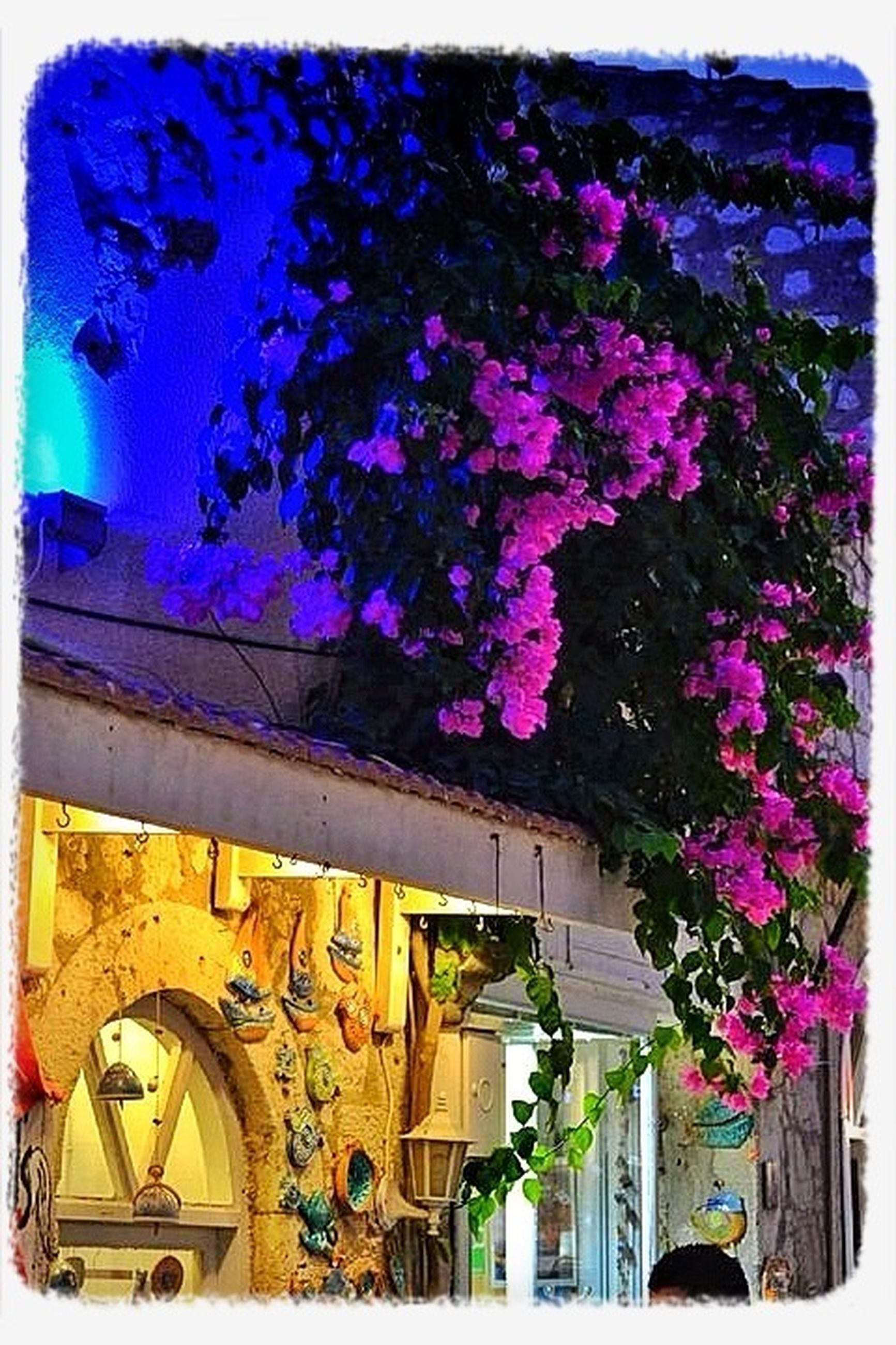 transfer print, auto post production filter, building exterior, built structure, architecture, flower, wall - building feature, house, multi colored, potted plant, art, art and craft, outdoors, wall, plant, day, no people, window, creativity, decoration