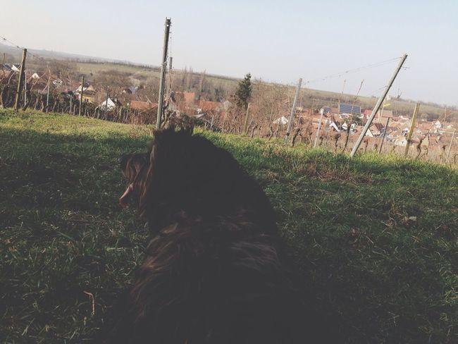 Hanging Out Enjoying Life Hello World Dog