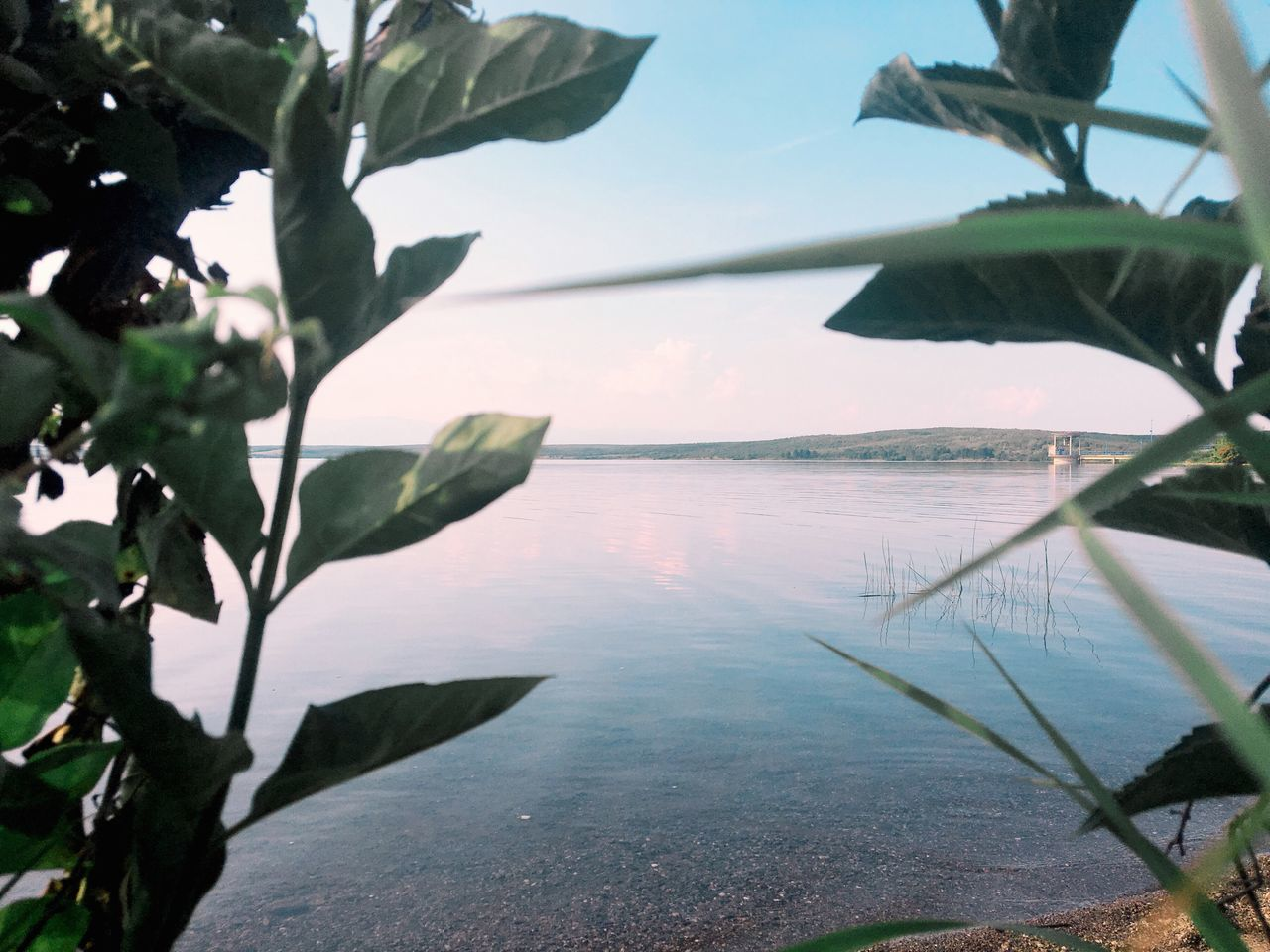 EyeEmNewHere Water Sea Nature Scenics Beauty In Nature Tranquil Scene Tranquility Leaf Sky No People Plant Outdoors Day Tree Close-up