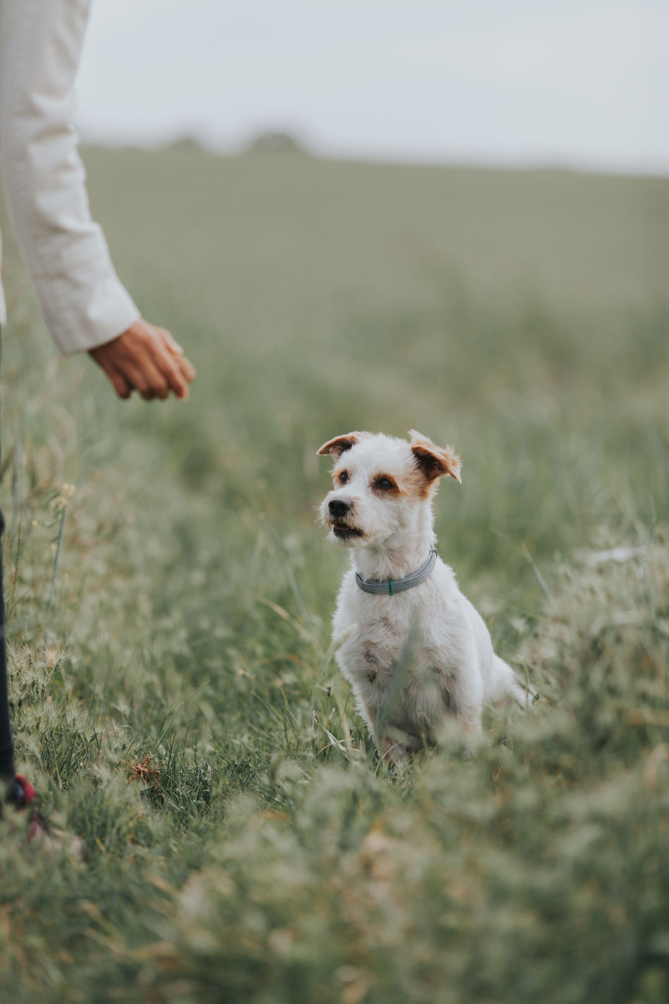 Animal Themes Day Dog Dog Playing Domestic Animals Field Focus Focus Object Friendship Grass Mammal One Animal One Person Pet Pets Pets Corner Pets Of Eyeem