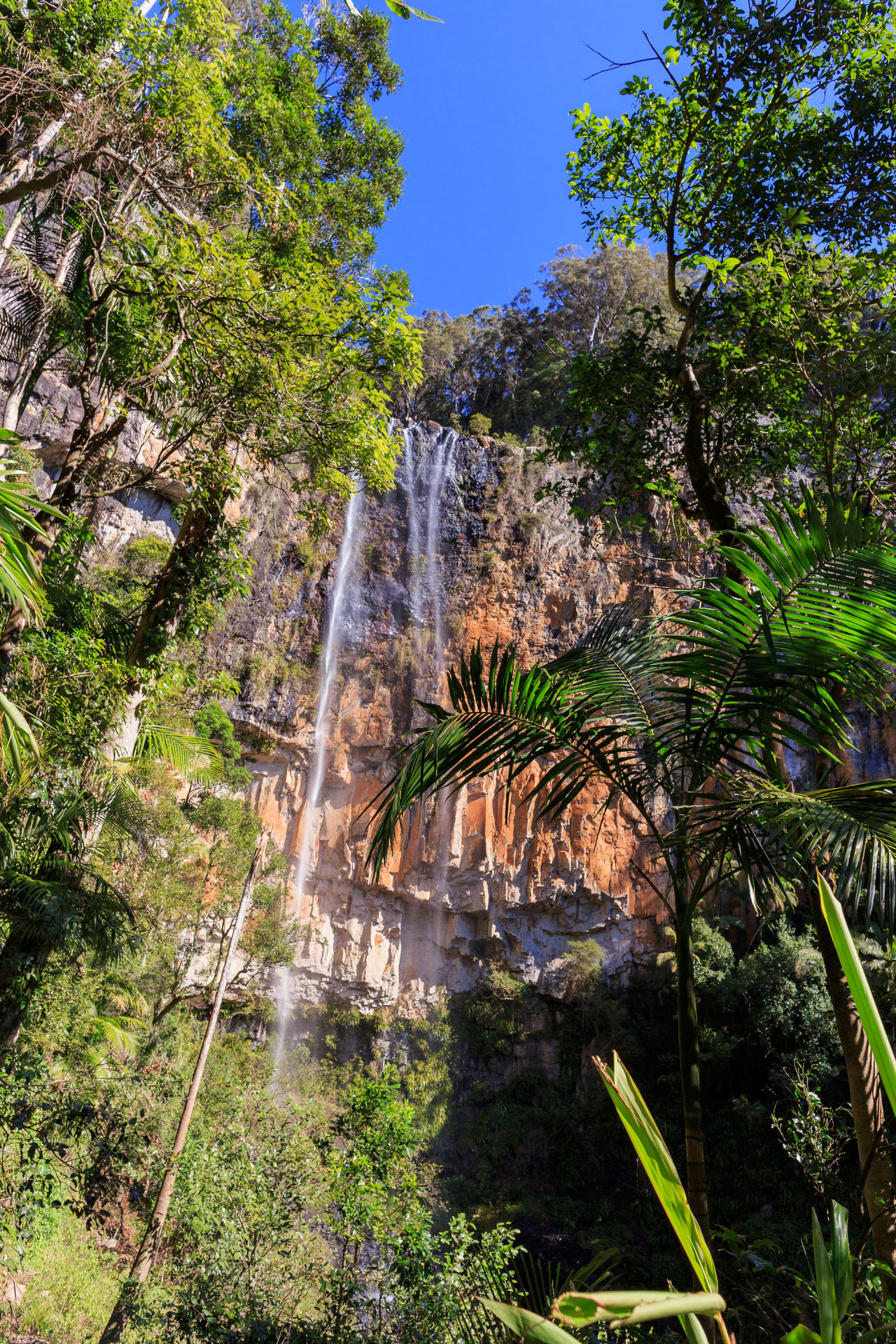 Beauty In Nature Day Forest GoldCoast Growth Nature No People Outdoors Plant Purling Brook Falls Queensland Scenics Sky Tranquil Scene Tranquility Tree