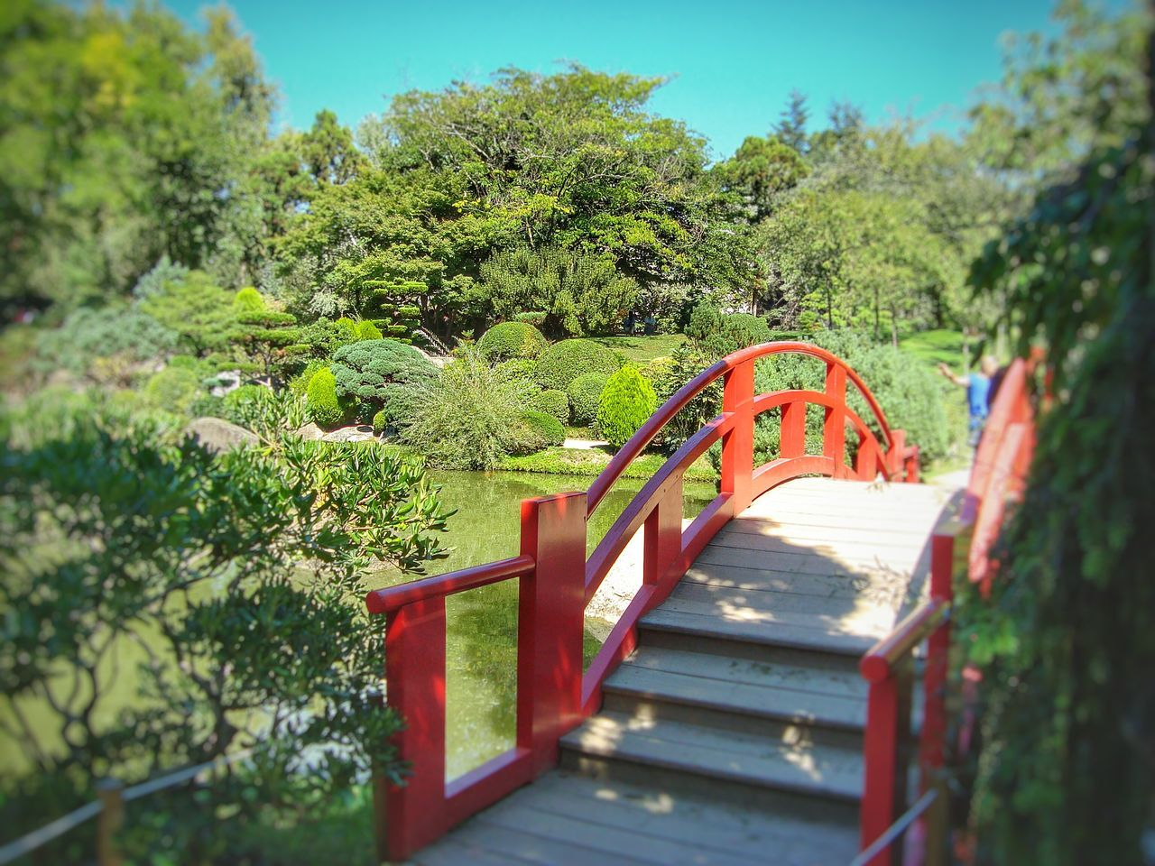 Perfect place for walking and relaxation. Beautiful Landscape Depth Of Field Eye4photography  EyeEm Best Shots EyeEm Nature Lover Flowers,Plants & Garden Garden Photography Japanese  Japanese Bridge Natural Harmony Nature Photography Park Peaceful And Quiet Selective Focus Steps