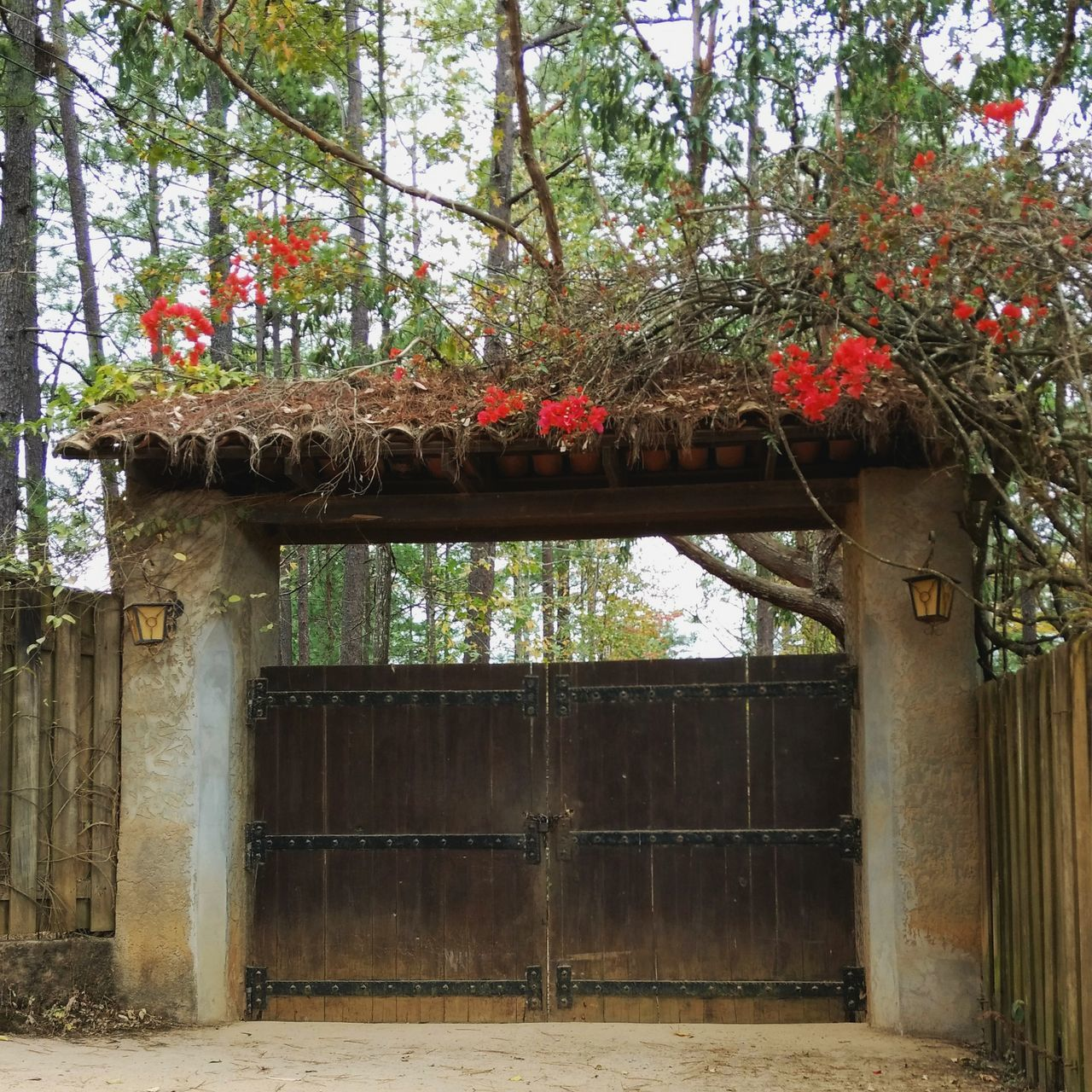 Door Tree Growth Built Structure Building Exterior No People Architecture Beauty In Nature Outdoors Nature Day Nature Green Taking Photos Honduras