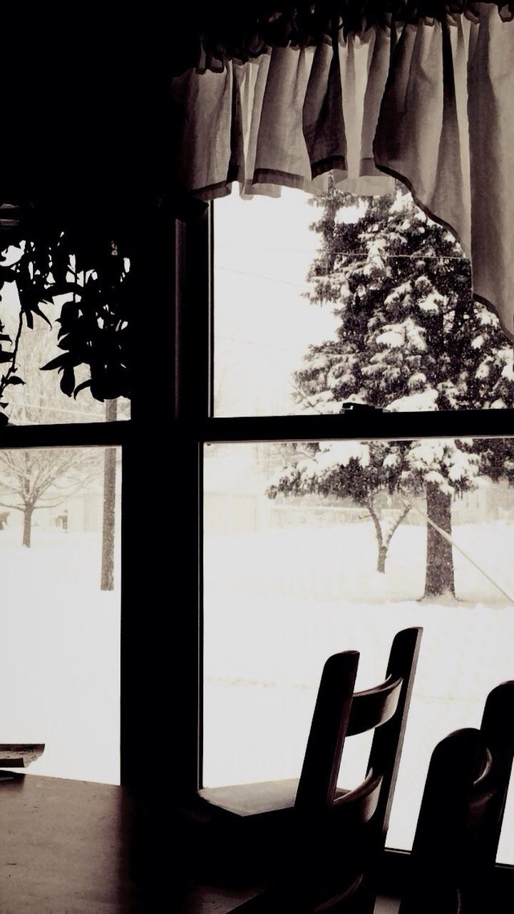 indoors, window, table, tree, chair, no people, day, close-up, nature