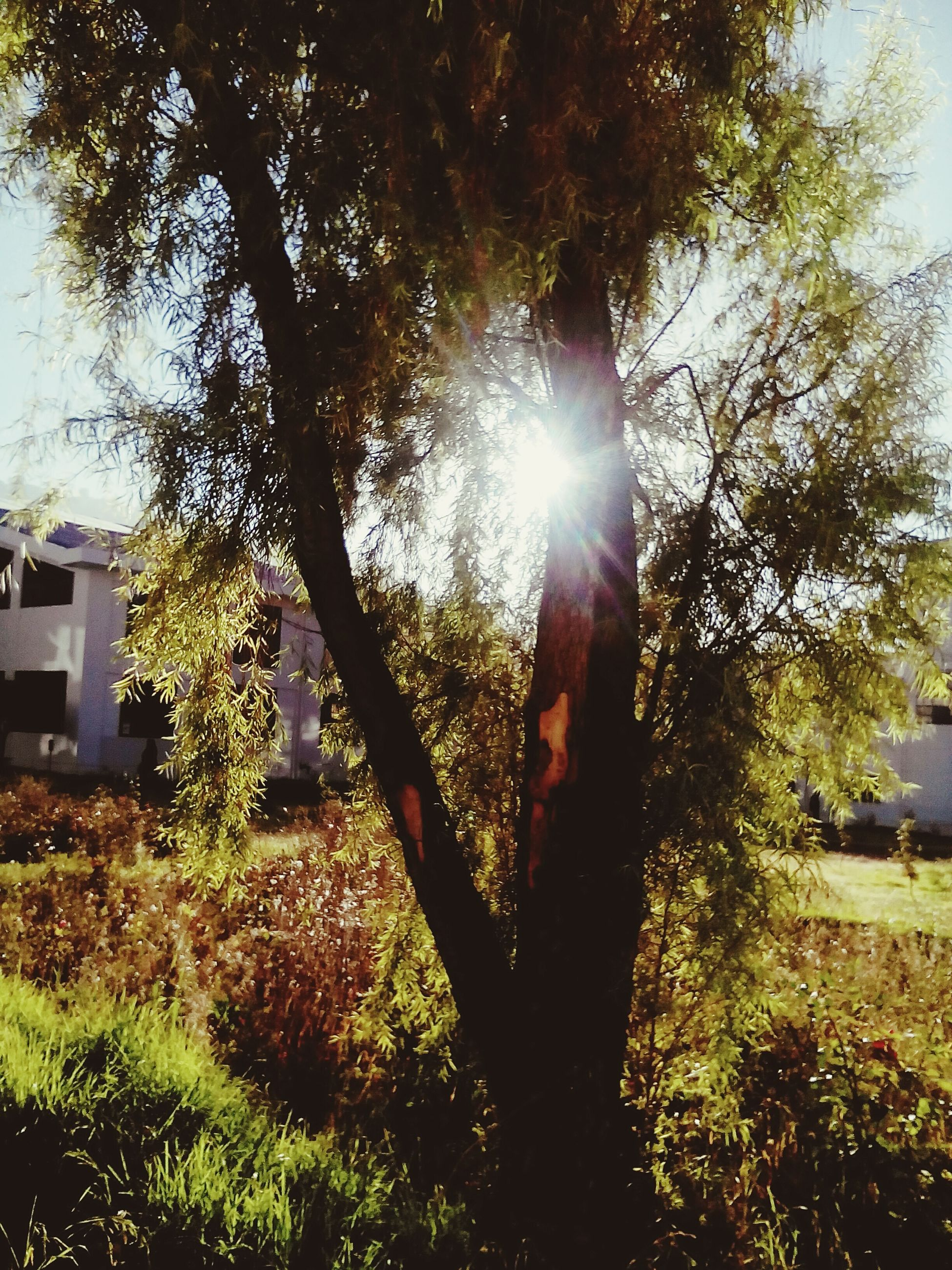 tree, sunlight, sunbeam, sun, day, nature, no people, tranquility, growth, outdoors, built structure, architecture, building exterior, sky, beauty in nature
