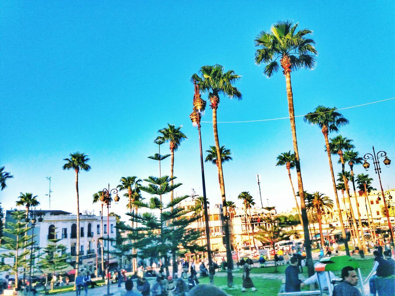 Crowd People Palms Sky Grass Tanger  EyeEmNewHere Sky Scenics Outdoors Tree Lighting Equipment Happiness