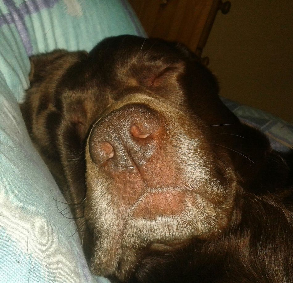 my wee boy having a snooze :-)
